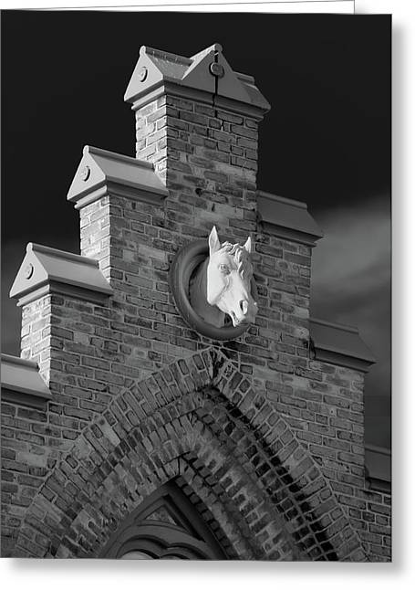 Appleton Wi Greeting Cards - Horsehead   8256 Greeting Card by Guy Whiteley