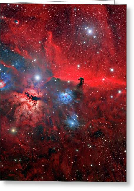Horsehead And Flame Nebulae Greeting Card by Tony & Daphne Hallas