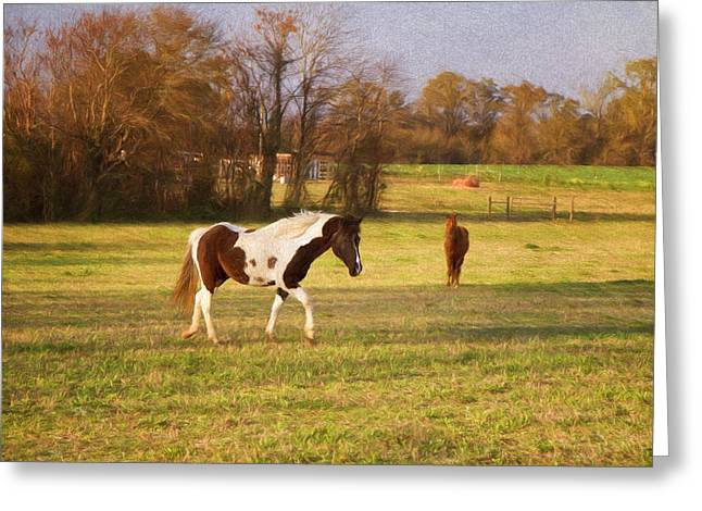 Kim Photographs Greeting Cards - Horseplay Greeting Card by Kim Hojnacki