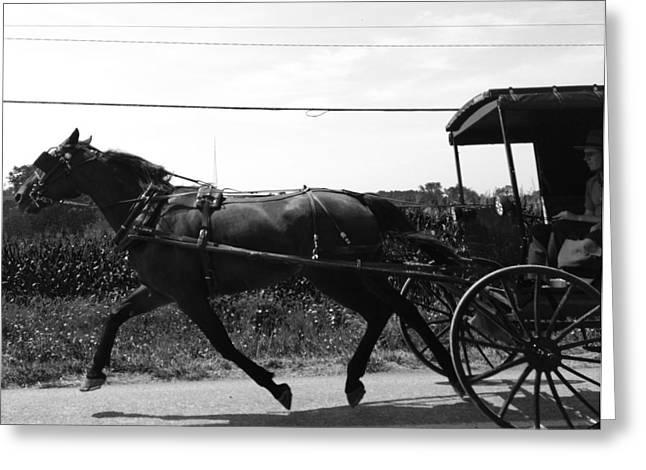 Horse And Buggy Greeting Cards - Horsepower 2 Greeting Card by Tami Bush