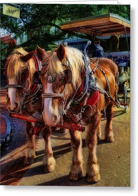 Equestrianism Greeting Cards - Horses - The Clydesdale Stallions Greeting Card by Lee Dos Santos