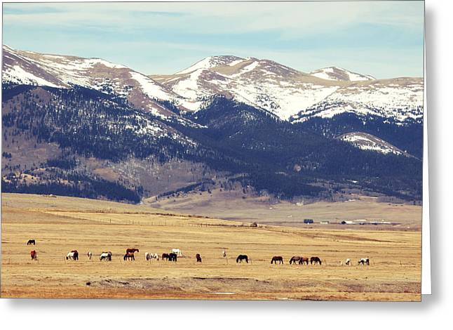 Grazing Snow Greeting Cards - Horses along the Rockies Greeting Card by Amelia Kay Photography