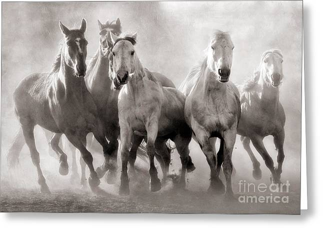 Charging Horses Greeting Cards - Horses and Dust Greeting Card by Heather Swan