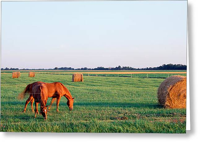 Early Autumn Greeting Cards - Horses And Hay, Marion County Greeting Card by Panoramic Images