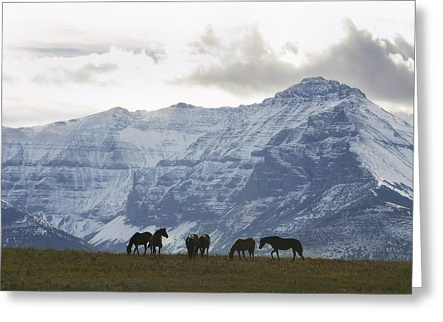 Silhouettes Of Horses Greeting Cards - Horses And Mountains, Southern Alberta Greeting Card by Benjamin Rondel