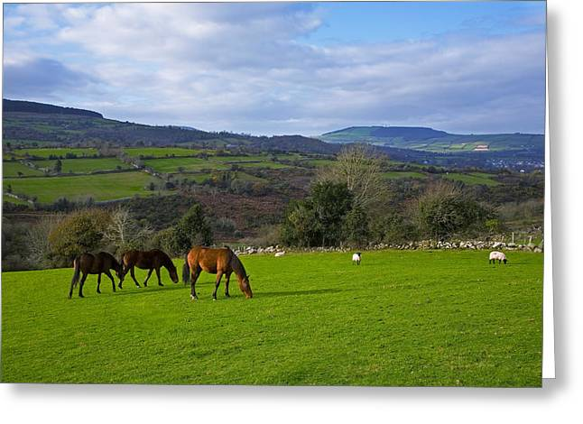 Barrow Greeting Cards - Horses And Sheep In The Barrow Valley Greeting Card by Panoramic Images