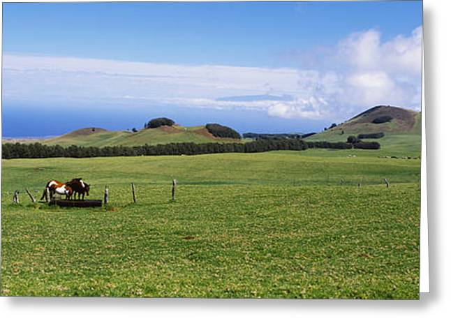 Horse Images Greeting Cards - Horses At Feeding At Trough In A Ranch Greeting Card by Panoramic Images