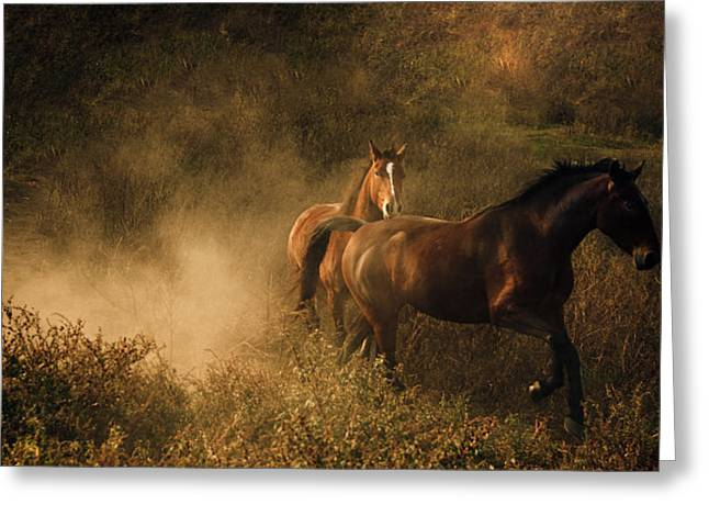 Quarter Horse Greeting Cards - Horses at Play in the Dust Greeting Card by Leslie Heemsbergen