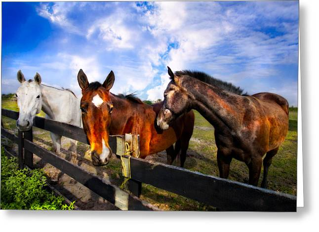 Horses At The Fence Greeting Card by Debra and Dave Vanderlaan