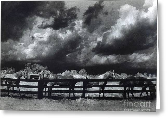 Horses Black and White Infrared Stormy Sky Nature Landscape Greeting Card by Kathy Fornal