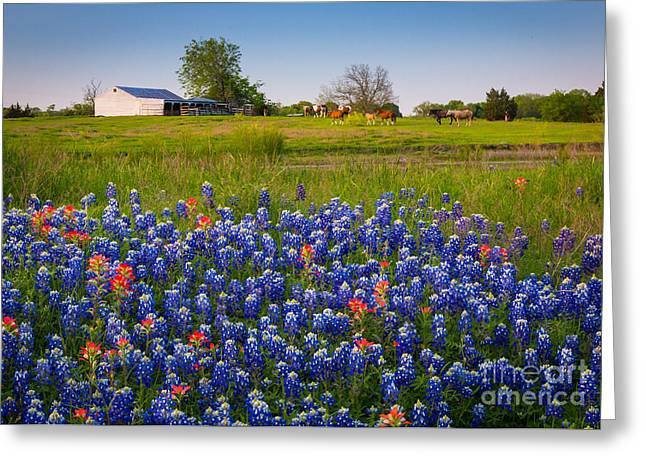 Bluebonnet Scene Greeting Cards - Horses coming home Greeting Card by Inge Johnsson