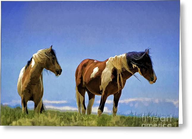 Horses - Double Painted Paints Greeting Card by Wildlife Fine Art