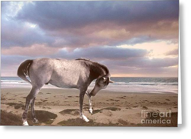 Equestrian Prints Photographs Greeting Cards - Horses Dreamy Surreal Fantasy Horse Beach North Carolina  Greeting Card by Kathy Fornal