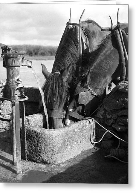 Horses Drinking From Stone Trough Greeting Card by Irish Photo Archive