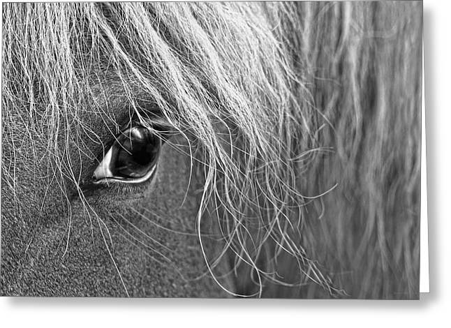 Protrait Greeting Cards - Horses Eye Monochrome Greeting Card by Jennie Marie Schell