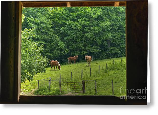 Horses Feeding In Field Greeting Card by Dan Friend