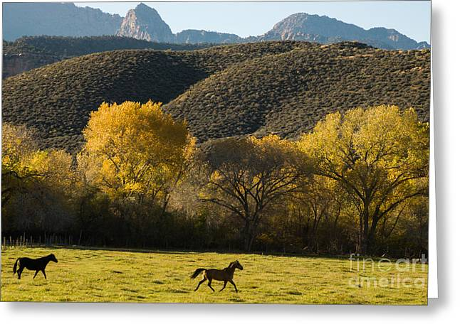 Geobob Greeting Cards - Horses Frolicking in Rockville Utah Greeting Card by Robert Ford