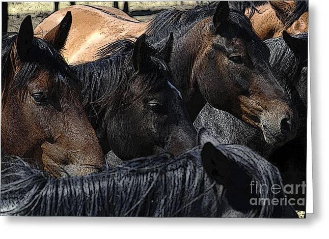 Bucking Horses Greeting Cards - Horses Galore Greeting Card by Bob Christopher