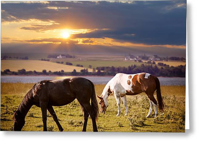 Quarter Horses Greeting Cards - Horses grazing at sunset Greeting Card by Elena Elisseeva