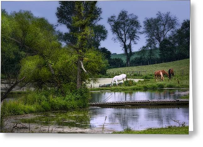 Horses Grazing At Water's Edge Greeting Card by Tom Mc Nemar
