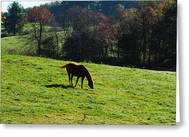 Color Change Greeting Cards - Horses Grazing In A Field, Kent County Greeting Card by Panoramic Images