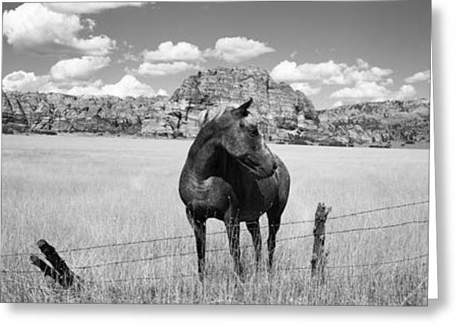 Horse Images Greeting Cards - Horses Grazing In A Meadow, Kolob Greeting Card by Panoramic Images