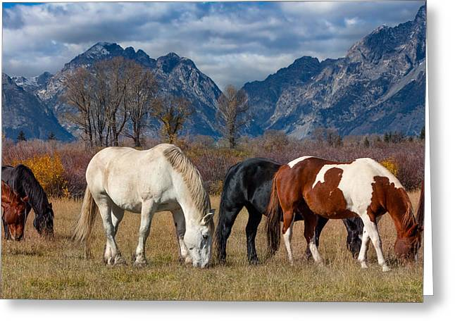 Fed Greeting Cards - Horses Grazing in the Grand Tetons Greeting Card by Kathleen Bishop