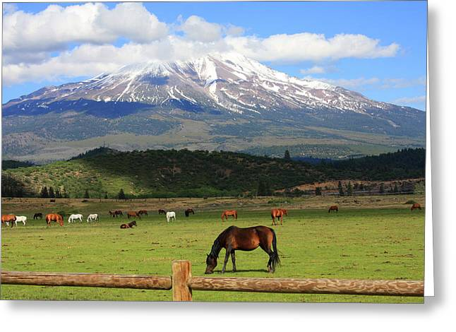 Best Sellers -  - Grazing Snow Greeting Cards - Horses grazing near Mt. Shasta Greeting Card by James Knight