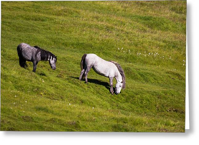 Horse Images Greeting Cards - Horses Grazing, Summertime, Iceland Greeting Card by Panoramic Images