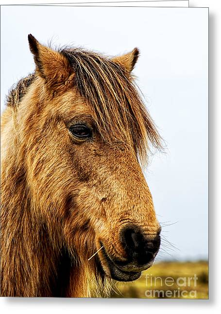 Equestrian Prints Photographs Greeting Cards - Horses Head Greeting Card by Chris Thaxter