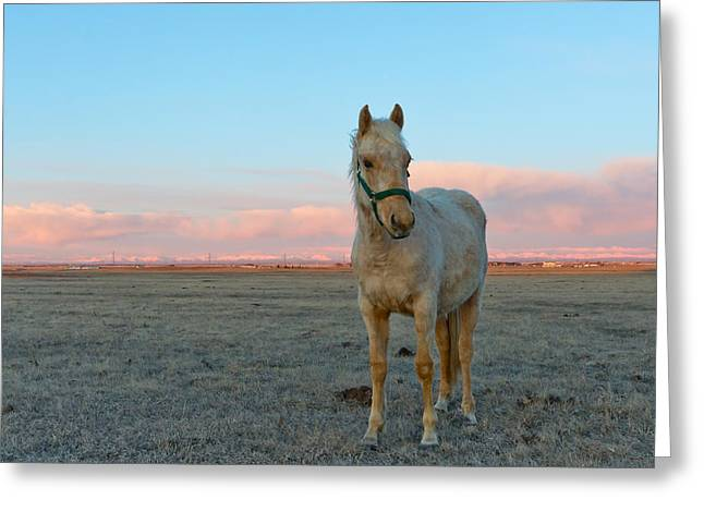 Sean Horse Greeting Cards - Horses in a Field at Sunrise Greeting Card by Sean Phillips