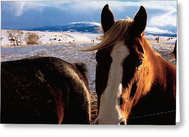 Horse Images Greeting Cards - Horses In A Field, Montana, Usa Greeting Card by Panoramic Images