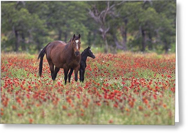 Horse Images Greeting Cards - Horses in a Field of Texas Wildflowers Greeting Card by Rob Greebon