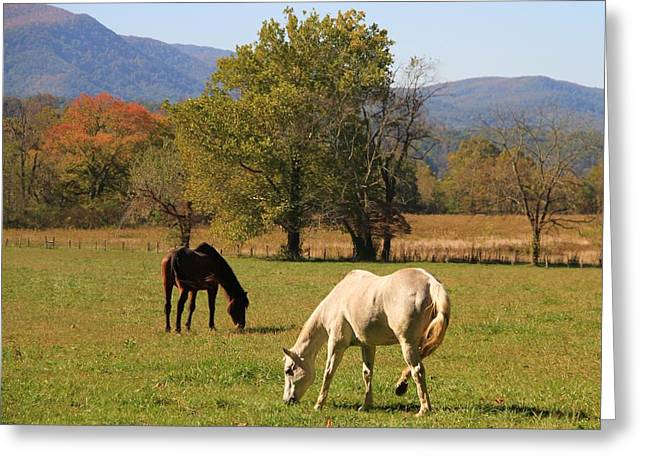 Gsmnp Greeting Cards - Horses In Cades Cove Greeting Card by Dan Sproul