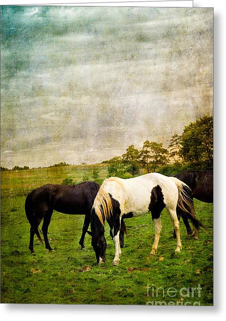 Looking Greeting Cards - Horses in Field Greeting Card by Amy Cicconi