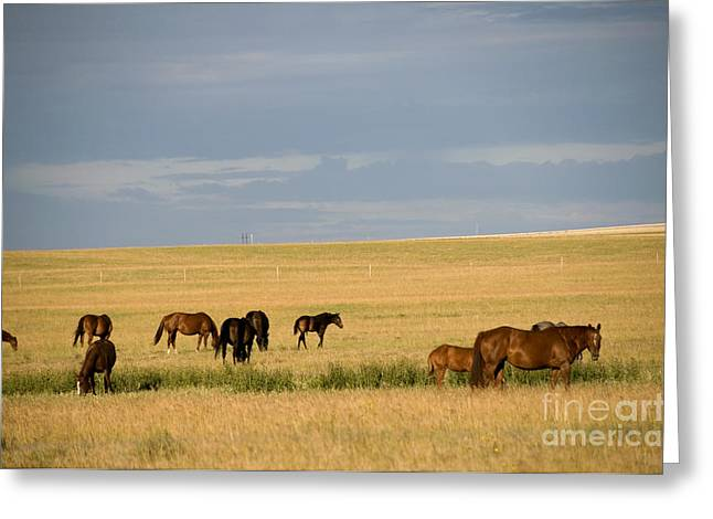 Saskatchewan Prairies Greeting Cards - Horses In Saskatchewan Greeting Card by Mark Newman