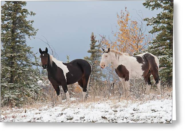 Equus Ferus Greeting Cards - Horses In Snow, Yukon, Canada Greeting Card by Mark Newman