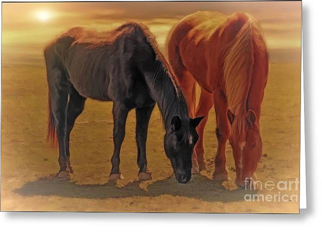 Equestrian Prints Photographs Greeting Cards - Horses In The Sunset Greeting Card by Tom York Images