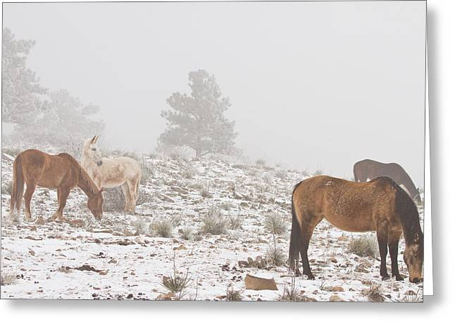 Rocky Mountain Foothills Greeting Cards - Horses in the Winter Snow and Fog Greeting Card by James BO  Insogna