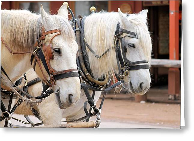 Horse Pulling Wagon Greeting Cards - Horses in tombstone Greeting Card by G Berry