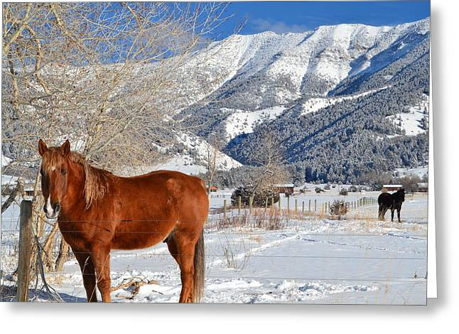 Photo Jewelry Greeting Cards - Horses in winter Greeting Card by Anne Foster