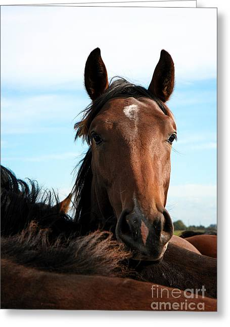 Close Focus Nature Scene Greeting Cards - Horses Greeting Card by Jan Brons