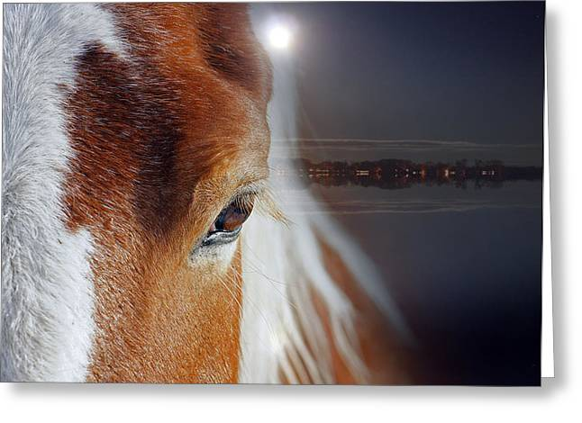 Horses  Greeting Card by Mark Ashkenazi