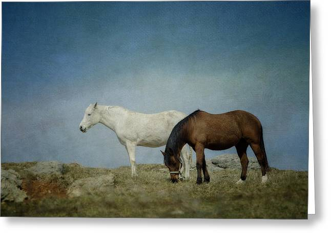 Horses On A Hill Greeting Card by Kathy Jennings