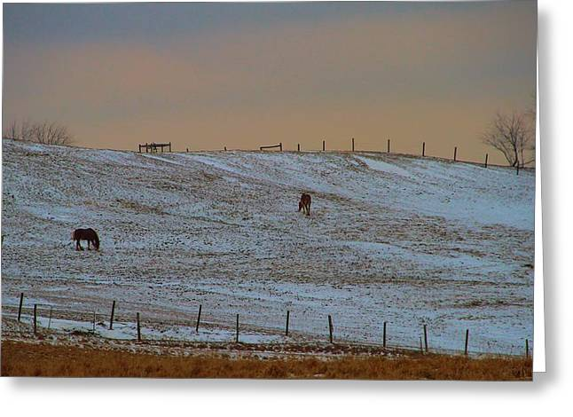 Grazing Snow Greeting Cards - Horses On The Farm In Winter Greeting Card by Dan Sproul