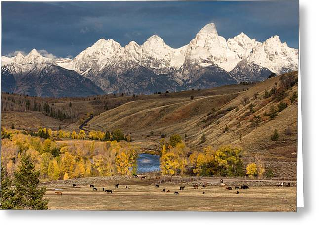 Fed Greeting Cards - Horses on the Gros Ventre River Greeting Card by Kathleen Bishop