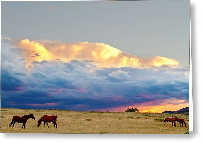Equestrian Prints Photographs Greeting Cards - Horses On The Storm Greeting Card by James BO  Insogna