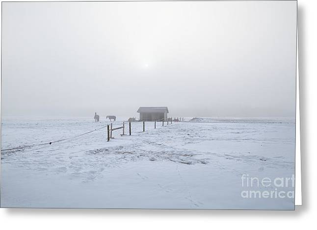 Cold Morning Sun Greeting Cards - Horses On Winter Snowy Pasture In Misty Morning Greeting Card by Olha Rohulya