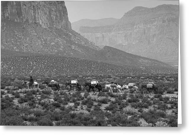 Nicholas Greeting Cards - Horses Pano Greeting Card by Nicholas  Pappagallo Jr
