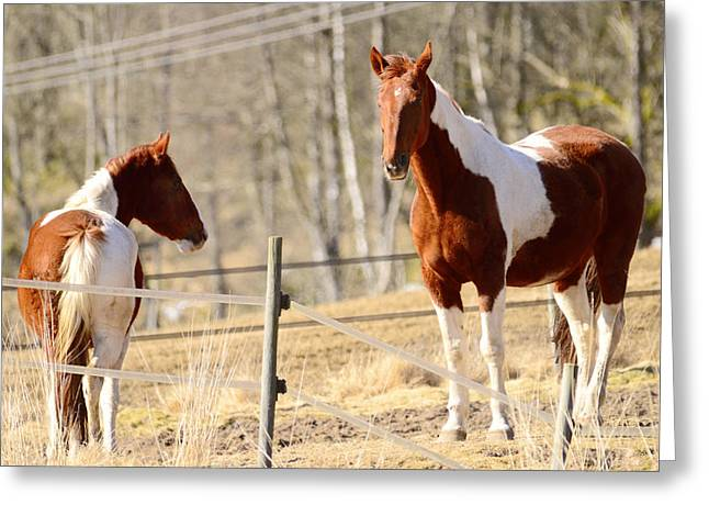 Sight See Greeting Cards - Horses posing Greeting Card by Toppart Sweden